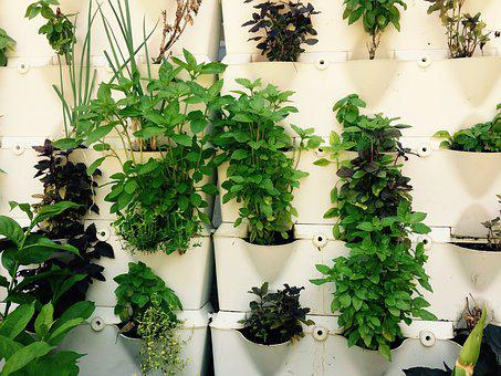Herbs, Herbal, Growing, Green, Plants, Culinary
