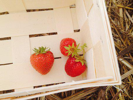Strawberries, Strawberry Field, Strawberry Plants
