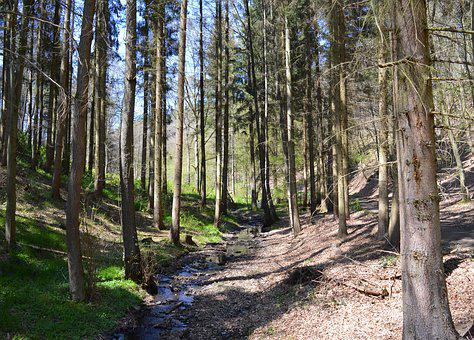 Forest, Trees, Landscape, Branch Branches, Forests, Log