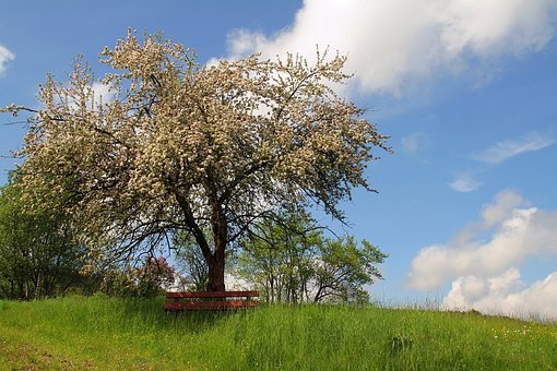 Bank, Tree, Nature, Lone Bank, Rest, Sky, Green