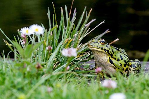 Toad, Amphibians, Botanical Garden, Flora Köln, Frog