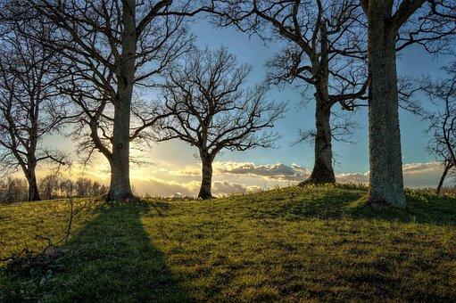 Hdr, Sweden, Tree, Sunlight, Solar, Sunset, Blue, Green