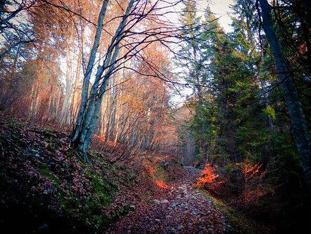 Sun, Autumn, Mood, Exceptional, Unique, Goose Bumps