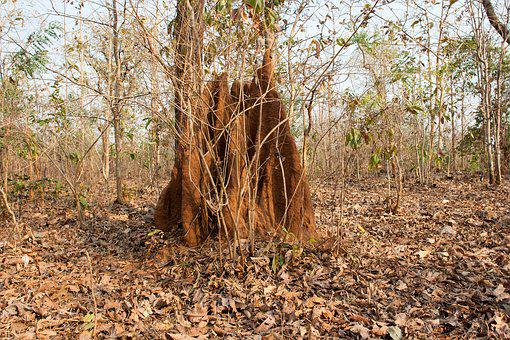 Anthill, India, Jungle, Tropical, Asia, Nature