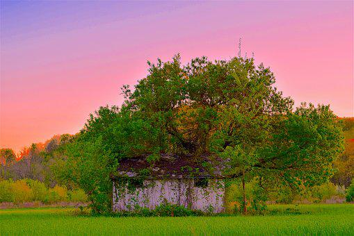 Shack, Run Down, Rustic, Old, Abandoned, Trees