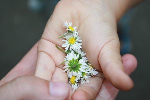 Daisies, Spring, The Child's Hand, Hands, Flowers