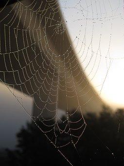 Bridge, Cobweb, Autumn, Network, Dew, Spider, Morgentau