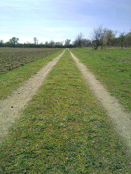 Way, Field, Country, Path, Farm Lane, Country Lane