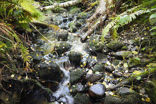 Water Courses, Running Water, Brook, Stones, Forest