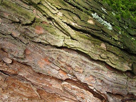 Wood, Bark, Log, Tribe, Structure, Tree, Grain, Macro