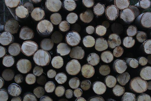 Wood, Logs, Forest, Tree, Timber, Lumber, Stack