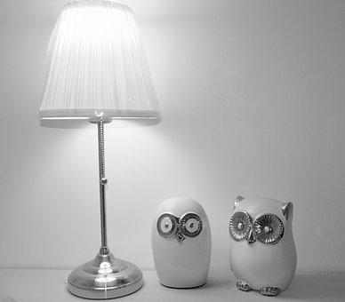 Owl, Owls, Animals, Forest, Curiosity, Object