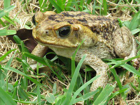 Toad, Animal, Nature, Amphibious, Soil, Leaves, Green