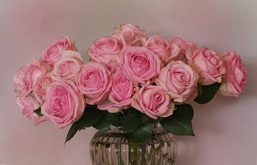 Bouquet Of Roses, Roses, Rose Family, Rosaceae, Flowers