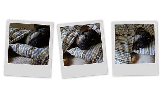 Dog, Basil, Doggy, Puppy, Animal, Pet, Friendship
