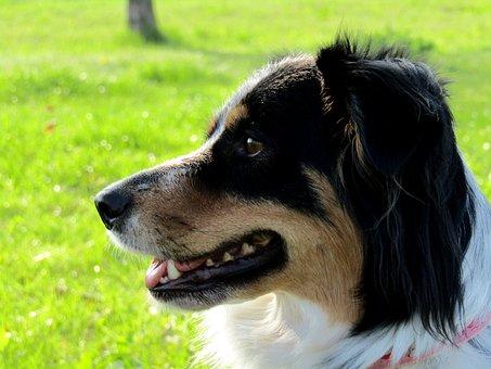 Dog, Grass, Outdoors, Mammal, Pet, Cute, Animal