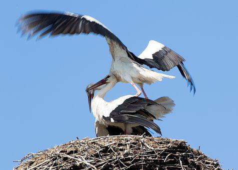 Stork, May, Spring, Nature, Animals, Landscape, Wing