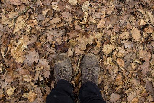 Hiking, Leaves, Autumn, Nature, Tree, Leaf, Away, Walk