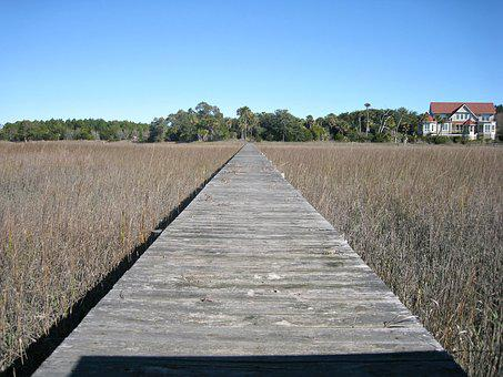 Boardwalk, Walkway, Wooden, Landscape, Nature, Path