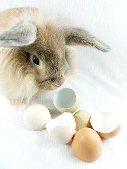Bunny, Rabbit, Easter, Eggshells, Eggs
