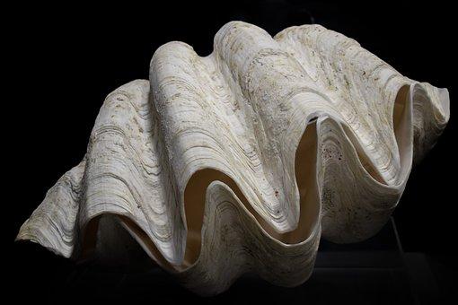 Tridacna Gigas, Shell, Giant Clam, Nature, Sea