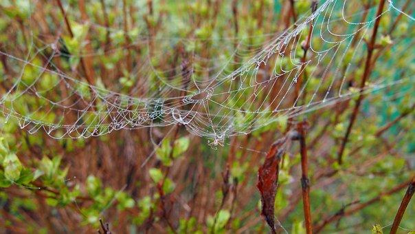 Cobweb, Spider, Macro, Arachnid, Network, Spider's Web