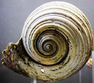 Shell, Nature, Seashell, Wildlife, Sea, Thalassa Museum