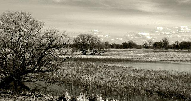 River, Nature, Bank, Landscape, Water, Or, Aue, Tree