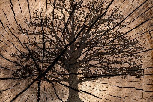 On Wood, Tree Rings, Tree, Texture, Background