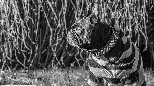 Dog, Animal, Walk, Cute, Pet, Pet Photography