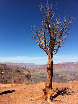 Tree, Canyon, Grand, Rock, Desert, Valley, Nature, Usa