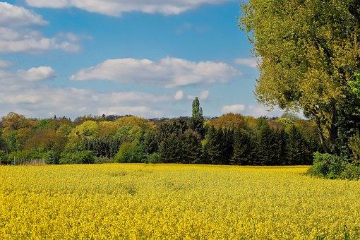 Landscape, Field Of Rapeseeds, Oilseed Rape, Yellow