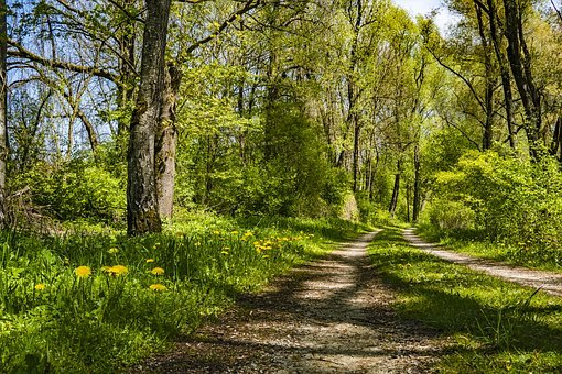 Away, Spring, Forest, Nature, Trees, Hiking, Trail