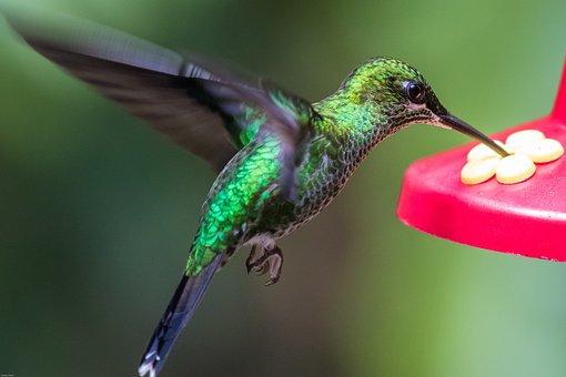 Hummingbird, Bird, Wing, Fly, Exotic, Green, Flutter