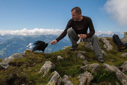 Feeding, Ridge, Hike, Bergdohle, Silhouette