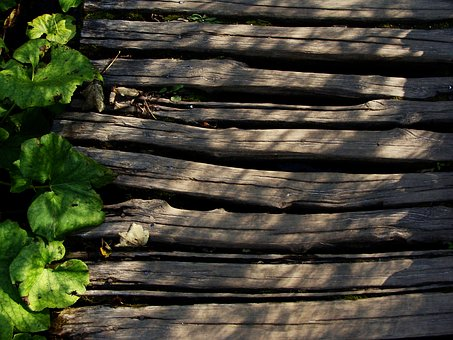 Wood, Path, Leaves, Wooden, Green, Leaf, Natural, Park