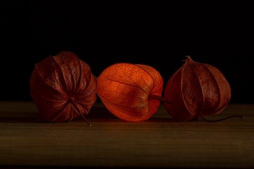 Lampionblume, Physalis, Orange, Nachtschattengewächs