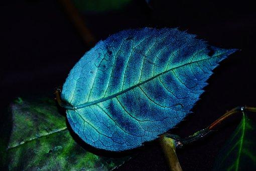 Foliage, Color, Blue, Plant, Grain