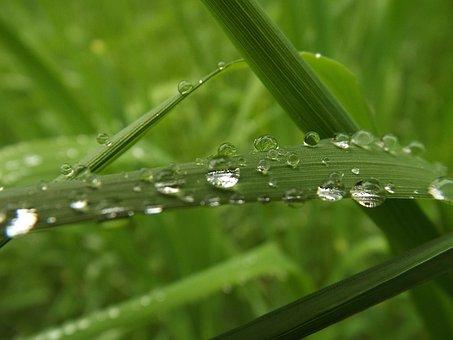 Raindrop, Grass, Drip, Drop Of Water, Grasses, Wet