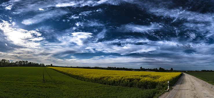 Panorama, Field Of Rapeseeds, Clouds, Sky, Landscape