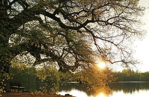 Sunset, Lake, Park, Abendstimmung, Nature, Romance, Sun