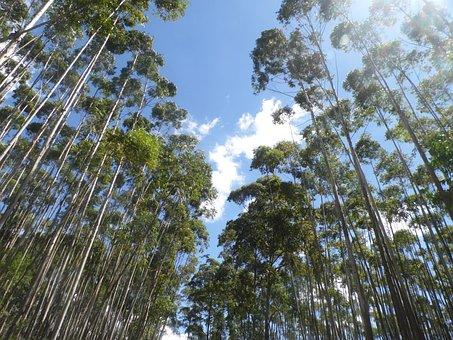 Sky, Tree, Landscape, Valley, Sol, Passion, Minas