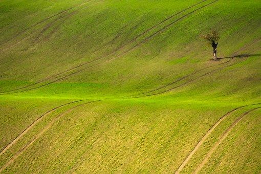Czech Republic, Landscape, Field, Meadow, Scenic