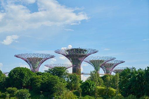 Singapore, Asian, Park, Garden, Nature, Green, Trees