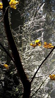 Autumn, Trees, Golden Autumn, Leaves, Mood, Light