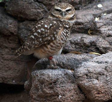 Owl, Bird, Wildlife, Animal, Nature, Wild, Cute