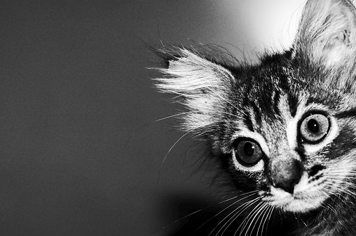 Cat, Kitten, Pet, Feline, Animal, Animals, Feline Look