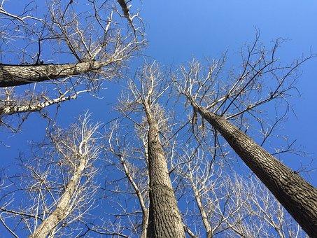 Blue Sky, Shadows, Look