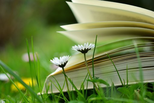 Book, Read, Relax, Meadow, Book Pages, Education, Books
