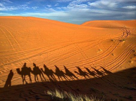 Camels, Morocco, Desert, Sand, Africa, Nature, Travel